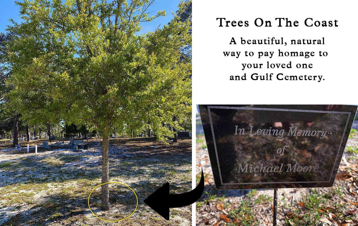 The Trees on the Coast Program